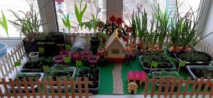 Экологическое воспитание детей в рамках реализации проекта «Огород на подоконнике» :